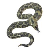 Serpiente - Pack de 3