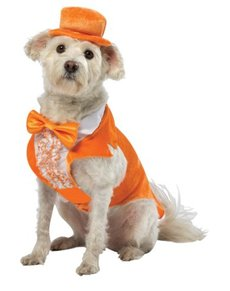 Disfraz de Lloyd Dos Tontos muy Tontos para perro